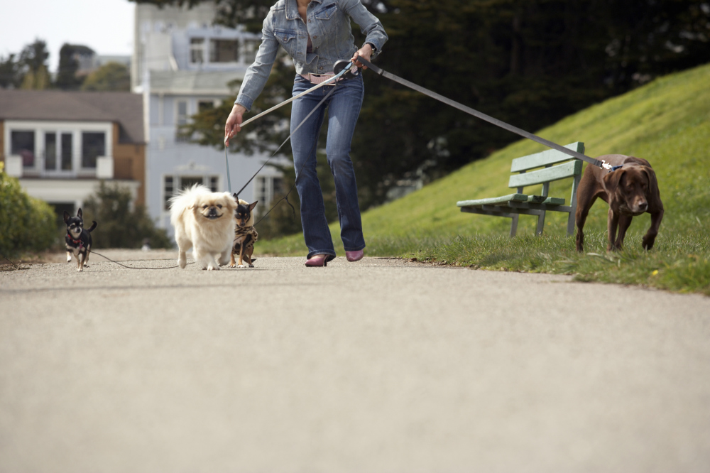 Person walking their dogs - beating off stress